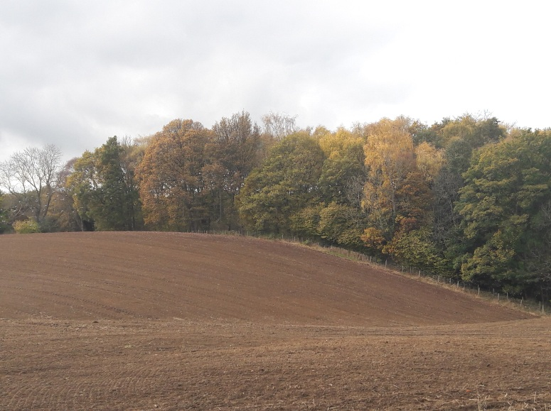 A ploughed field with trees in various autumn colours lining one side.